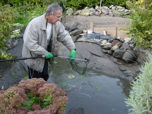 Bassin poisson plastique angers maison design for Bassin de jardin en plastique
