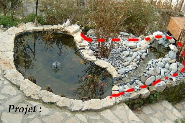 Awesome Bassin De Jardin Tortue Pictures - Design Trends 2017 ...