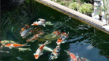 Oxyg nation d 39 un bassin de jardin for Bassin a poisson sans filtre
