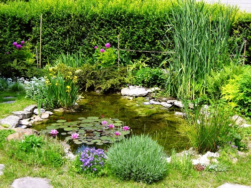 Bassin de maison jardin for Photo bassin de jardin
