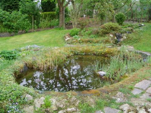 bassin de jardin de bernard Waterloo (belgique) page 1