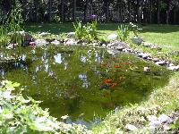 Page 11 des photos de bassin de jardin - Jardin sauvage st roch l achigan colombes ...