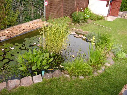 Le bassin de philippe - Profondeur d un bassin de jardin ...