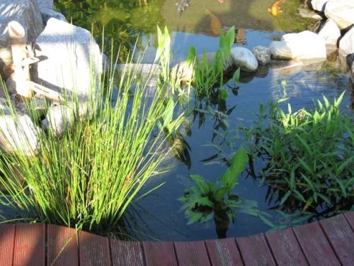Le bassin de jardin de paul - Bassin jardin preforme saint paul ...