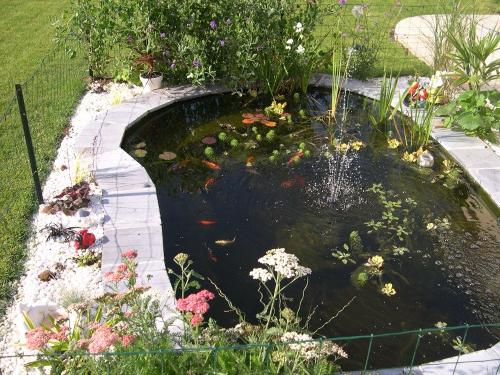 Le bassin de jardin de sophie for Bache bassin poisson